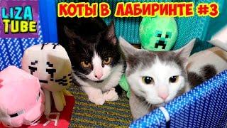 ЛАБИРИНТ #3 для КОШЕК Коржик и Компот Три кота проходят лабиринт МАЙНКРАФТ \ LizaTube