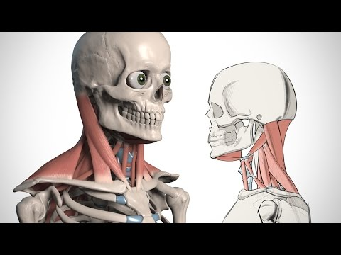 How to Draw the Neck - Anatomy for Artists