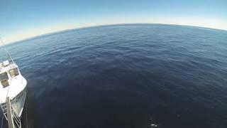 Fishermen meet huge white shark in Cape Cod Bay