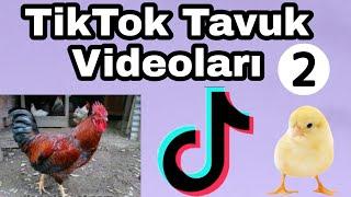 TikTok Tavuk Videoları 2