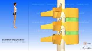La colonne vertébrale simplifiée et la vertèbre type