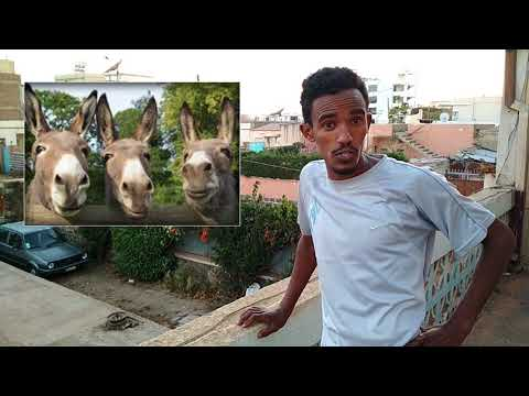 Eritrean Comedy- Animal News
