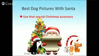 Dog Pictures With Santa Tips - Make Em Pretty/Handsome  (2 of 5)
