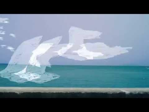 AL / あのウミネコ [MUSIC VIDEO]