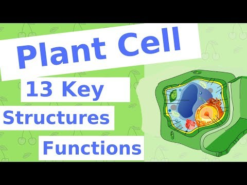 the-plant-cell-|-13-key-structures