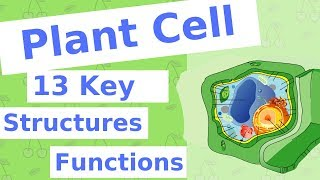 The Plant Cell | 13 Key Structures
