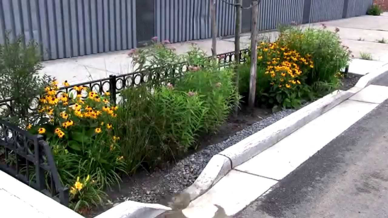 Bioswale Time Lapse Single Storm Youtube