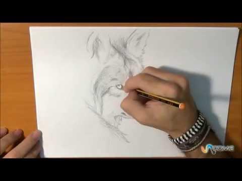 Come disegnare un lupo in maniera realistica youtube for Immagini di cavalli da disegnare