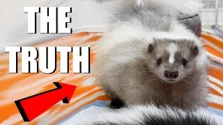SKUNKS AS PETS  What You Need To Know | EMZOTIC