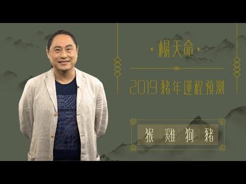 楊天命 | 2019豬年運程預測(猴雞狗豬)!十二生肖犯太歲、吉星、凶星講解 | ELLE HK
