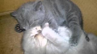 Самые милые котята (Часть 2) / Very sweet kittens (Part 2)