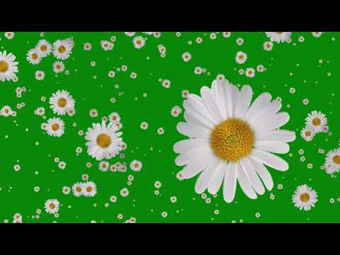 Flowers Falling Animation Green Screen Free Effects thumbnail