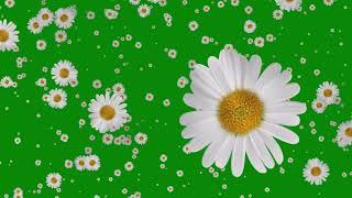 Flowers Falling Animation Green Screen Free Effects