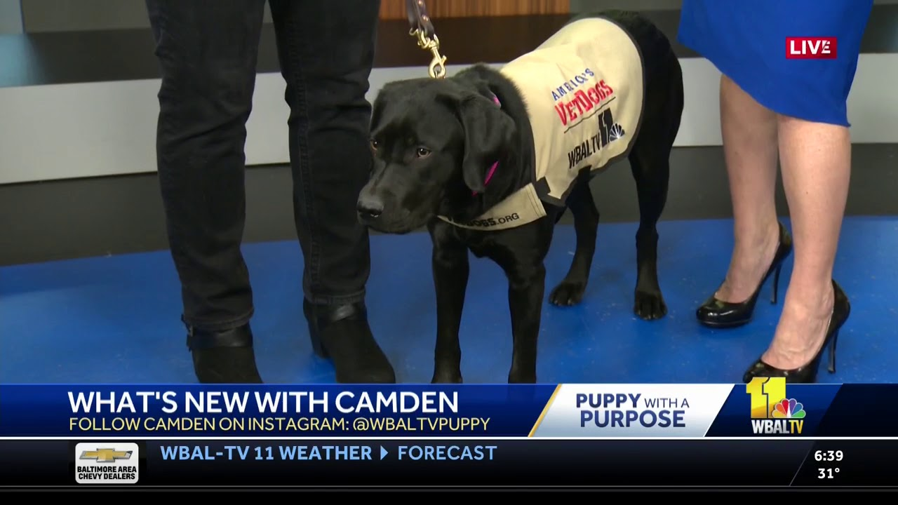 Camden - WBAL-TV NBC Baltimore Puppy