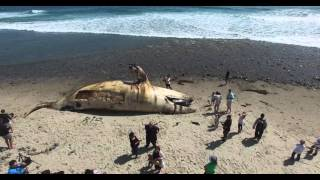 Get a bird's eye view of a dead whale in 4K