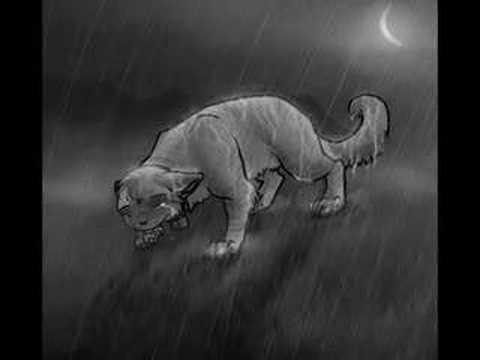 Warriors-Bluestar~Stand In The Rain