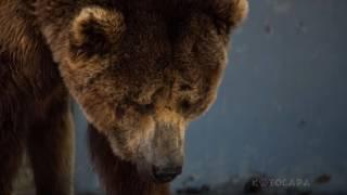 Жестокое Обращение с Животными ( Трогательное видео) До слёз