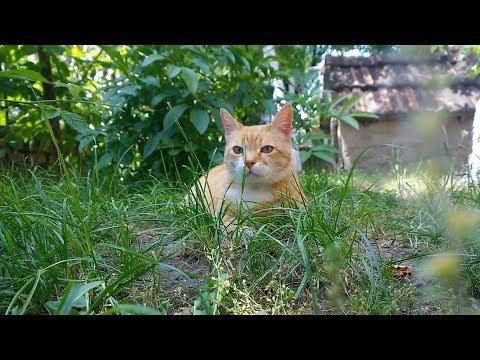 Relaxing Cat Video 2