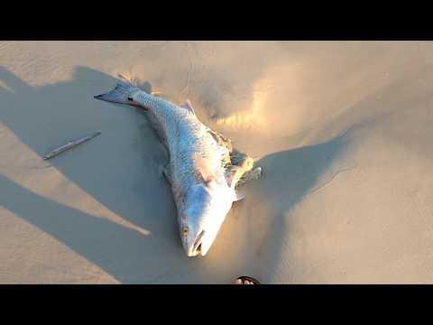 Red Tide Panama City Beach FL hundreds of dead fish September 15 2018 6 PM