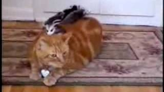 Cat and Possums