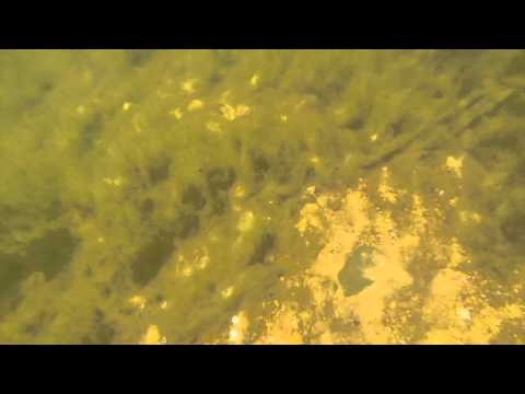 The bass and beds of Norfork Lake