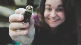 We HATCHED 116 of these MICRO CHICKS!! | Roots and Refuge Farm