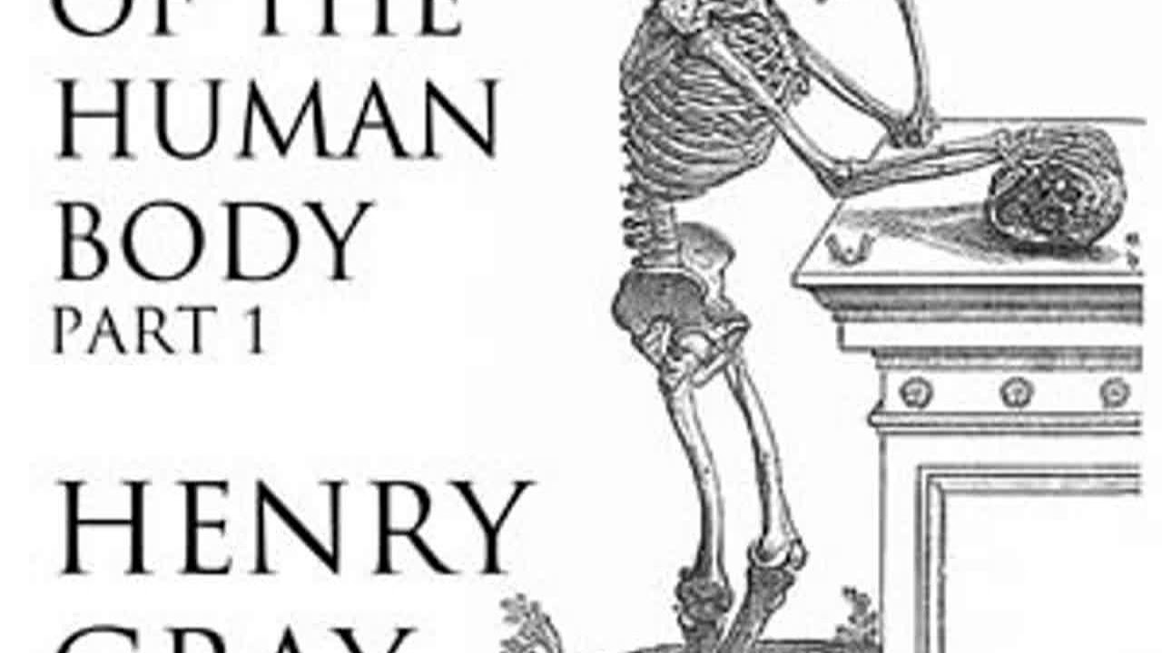 Anatomy Of The Human Body Part 1 Grays Anatomy By Henry Gray