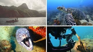 SeaLife Underwater Cameras | Scuba Diving the Island of Dominica with the Latest SeaLife Gear