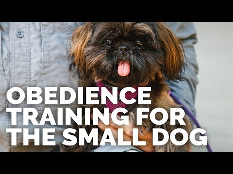 Obedience Training for the Small Dog I Trailer