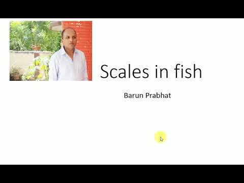 Focus Biology Scales in fish (hindi)