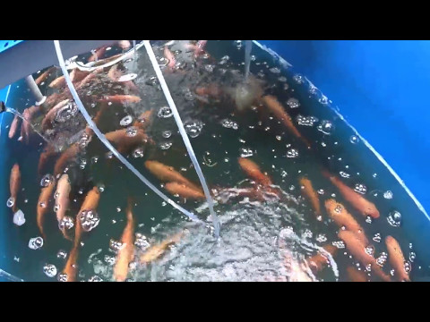 Akuaponik chemat1000 : kolam 1 - kolam 3