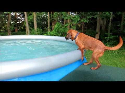 how to get dog to swim