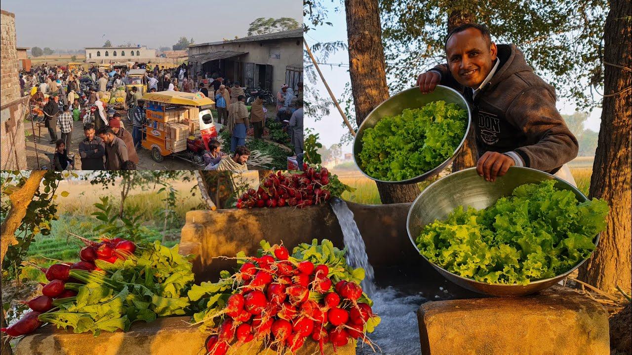 How Much we Earn from Vegetables | Vegetable Harvesting ...