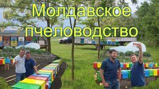 На пасеке Андрея Бодина (Молдова)