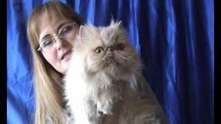Питомник кошек персов и экзотов PCA САНТА-ДИКСИ