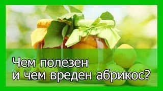 Чем полезен и чем вреден абрикос