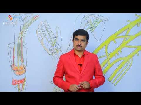 Median nerve anatomy - Usmle quick review lecture - Dr Bhanu prakash
