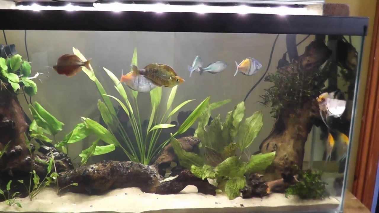 Creating My Rainbowfish Aquarium Youtube