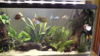 Creating My Rainbowfish Aquarium