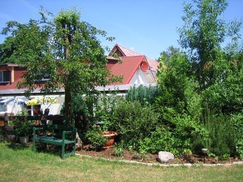 baumschule--wie-vermehre-ich-kostenlos-bäume-und-büsche?