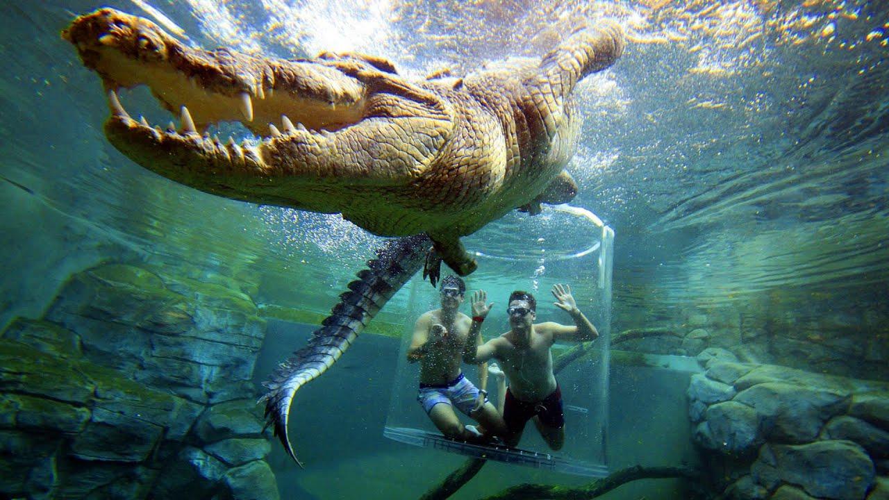 حمام سباحة غريب جدا !شاهده