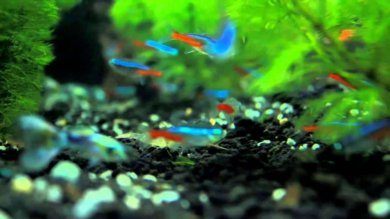Mini Aquarium With Diy Co2 Diffuser