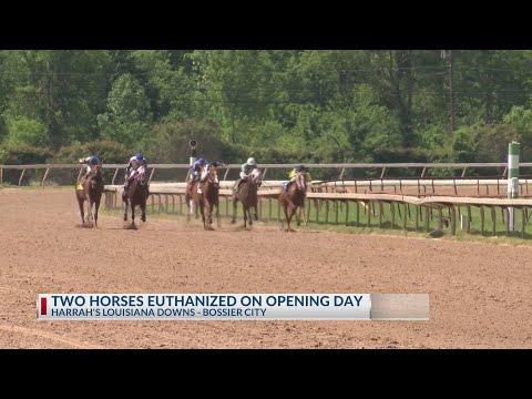 Harrah's Louisiana Downs Has Two Horses Die