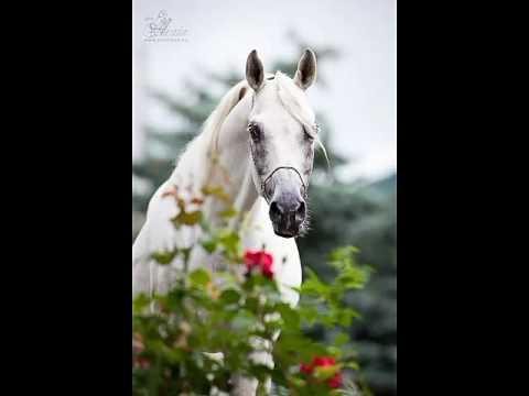 Картинки лошадей под песню Serebro - Chocolate