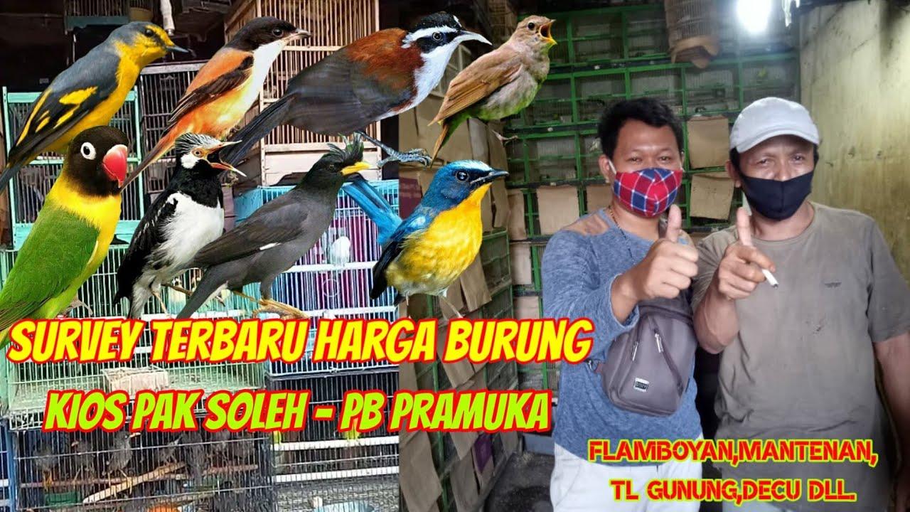Harga Burung Flamboyan Terbaru Suka Kicauan Cek Harga Burung Flamboyan Ombyokan Terbaru 2020