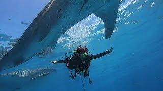 Tajemnice Morskich Głębin