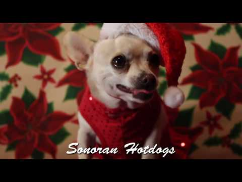 Christmas Songs: Chihuahua Christmas Music