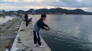 福岡県福津市 津屋崎防波堤・堤防エギング・イカ釣り 2014年5月