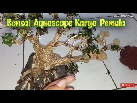 nempelin-buchepalandra-di-bonsai-aquascape---aquascape-karya-pemula