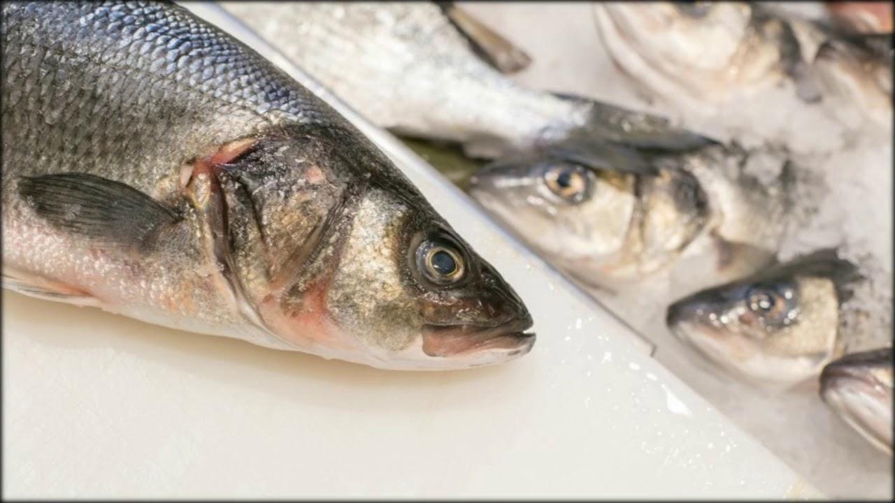 Ist Thunfisch Aus Der Dose Roh